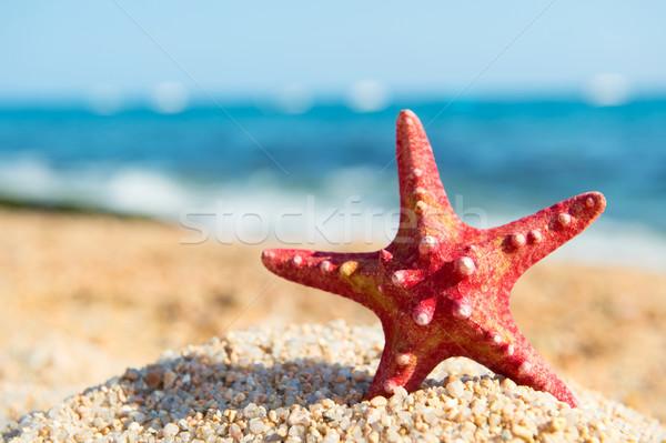 Rouge starfish plage permanent eau paysage Photo stock © ivonnewierink
