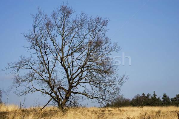 Empty tree in landscape Stock photo © ivonnewierink