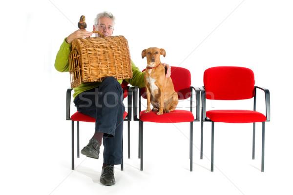Homem animais papagaio gato cão médico Foto stock © ivonnewierink