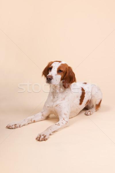 Stockfoto: Portret · cute · studio · room · gekleurd · achtergrond