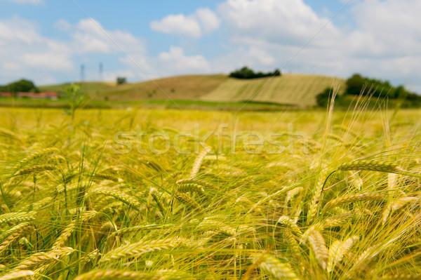 Agrícola paisaje Francia francés hierba verano Foto stock © ivonnewierink