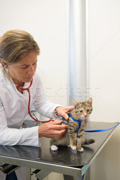 Veterinarian examining little cat Stock photo © ivonnewierink