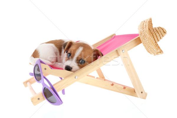 Strand puppy weinig cute stoel Stockfoto © ivonnewierink