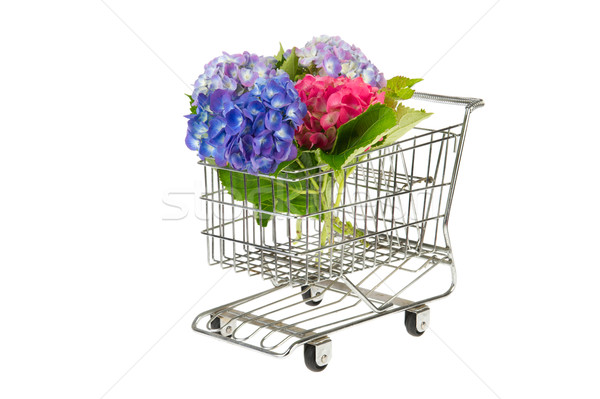 Blue and pink Hydrangea in shopping cart Stock photo © ivonnewierink