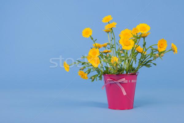 花束 黄色の花 青 ピンク バケット 背景 ストックフォト © ivonnewierink