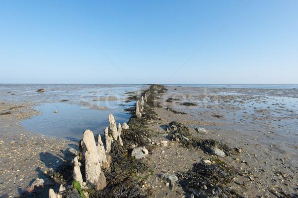 海 オランダ 島 自然 地平線 泥 ストックフォト © ivonnewierink