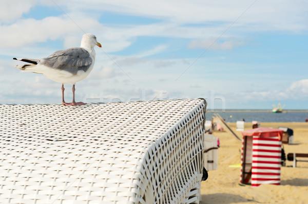 Beach tent Borkum with sea gull Stock photo © ivonnewierink