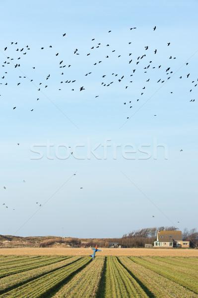 かかし 農業 フィールド オランダ語 島 家 ストックフォト © ivonnewierink