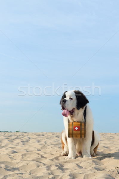 Mentés kutya hordó állat tengerpart nyár Stock fotó © ivonnewierink