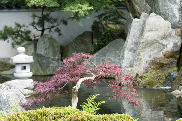 Japanese garden Stock photo © ivonnewierink
