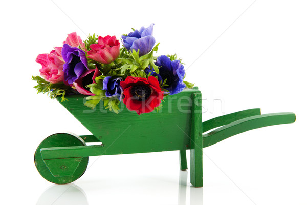Bouquet Anemones in wheel barrow Stock photo © ivonnewierink