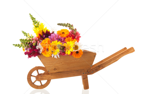 Colorful bouquet garden flowers in wheel barrow Stock photo © ivonnewierink