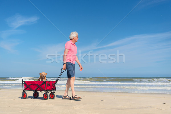 Senior om mers câine plajă coş Imagine de stoc © ivonnewierink