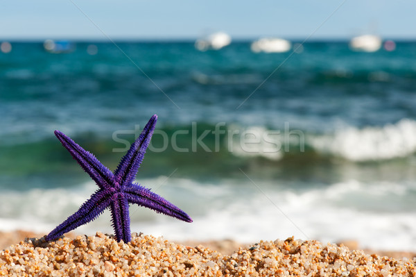 Pourpre starfish plage permanent nature Photo stock © ivonnewierink