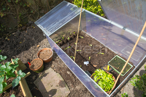 Cold container in vegetable garden Stock photo © ivonnewierink