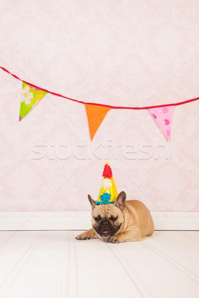 Francia bulldog születésnap szoba régi tapéta buli Stock fotó © ivonnewierink