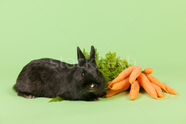 Rabbit with fresh carrots Stock photo © ivonnewierink