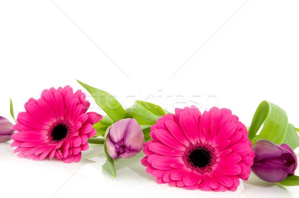Flor rosa guirnalda retrato tulipanes rosa Foto stock © ivonnewierink