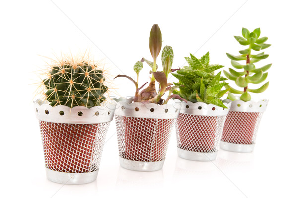 Succulents and cactus Stock photo © ivonnewierink