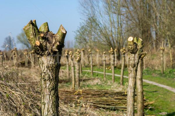 Típico holandês holandês paisagem árvores Holanda Foto stock © ivonnewierink