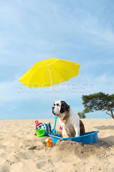 冷却 ダウン 犬 ビーチ 面白い 水 ストックフォト © ivonnewierink