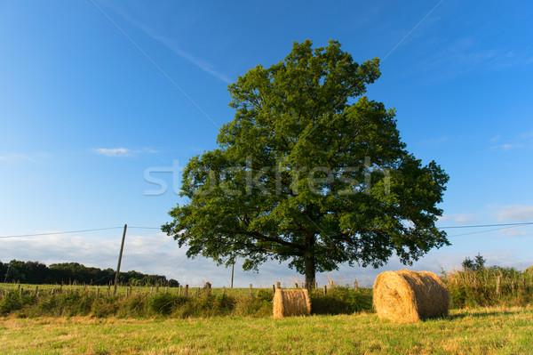 сено полях сельского хозяйства пейзаж Сток-фото © ivonnewierink