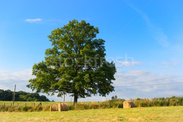 Széna tekercsek mezők arany mezőgazdaság tájkép Stock fotó © ivonnewierink