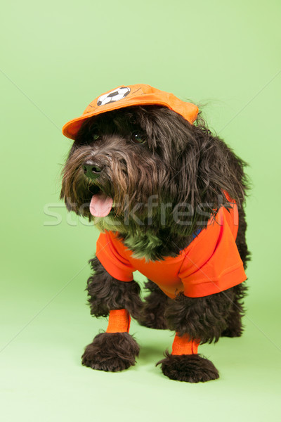 Dog as soccer supporter Stock photo © ivonnewierink