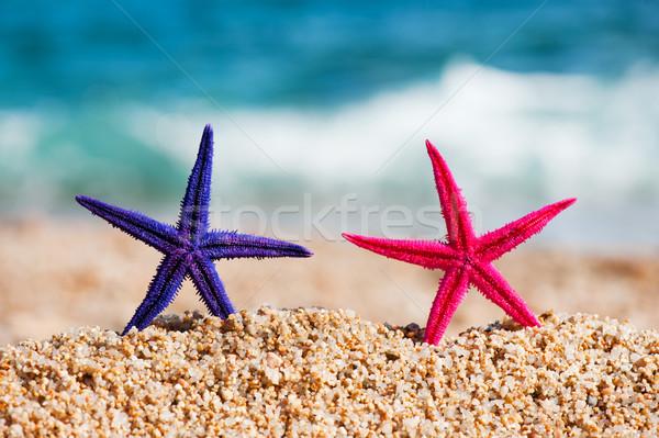 Standing starfishes Stock photo © ivonnewierink