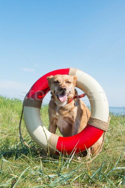 Salvare câine coastă top mare medalie Imagine de stoc © ivonnewierink
