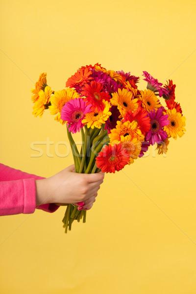 Bouquet Gerber on yellow Stock photo © ivonnewierink