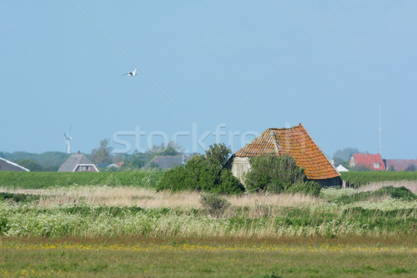 Old barn at Dutch wadden island Texel Stock photo © ivonnewierink