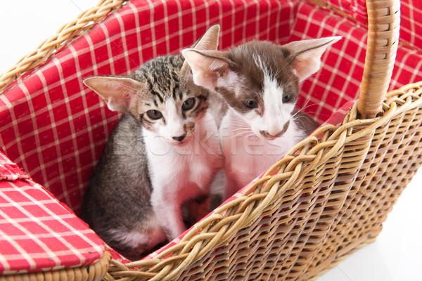 Little cat hiding in picnic basket Stock photo © ivonnewierink