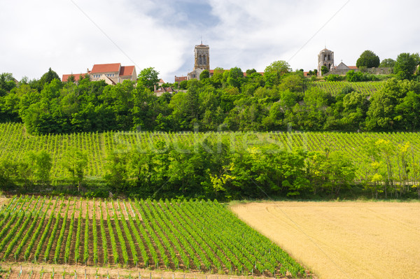 Vineyards in French Burgundy Stock photo © ivonnewierink