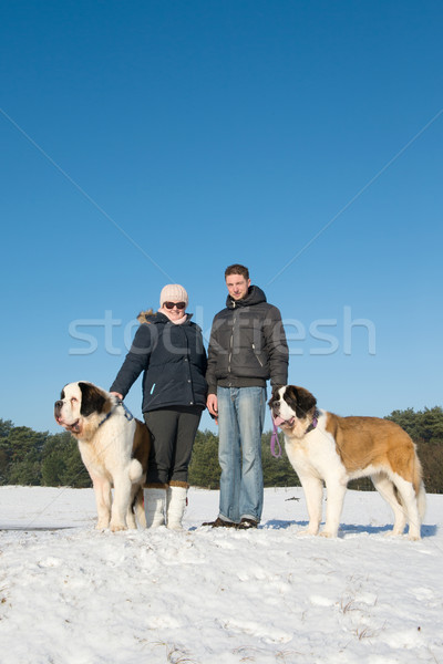 Owners with rescue dog in snow Stock photo © ivonnewierink