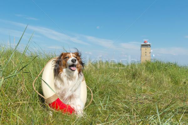 Resgatar cão natureza holandês ilha farol Foto stock © ivonnewierink