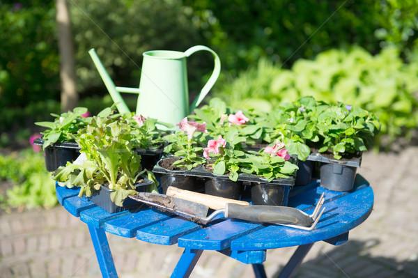 Plants for the garden Stock photo © ivonnewierink