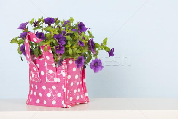 Petunia plant in interior Stock photo © ivonnewierink