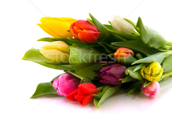 Foto stock: Ramo · tulipanes · flores · tulipán · blanco