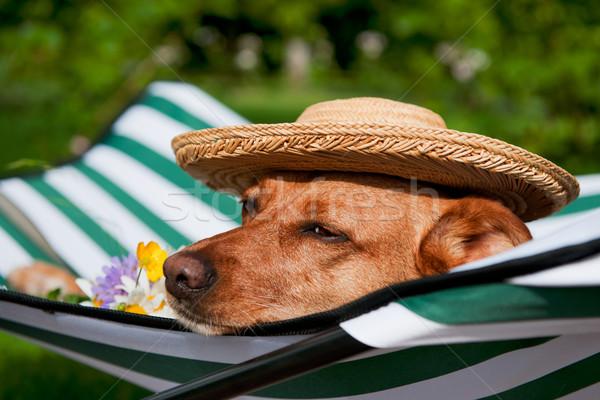 犬 休暇 怠惰な ベッド 面白い 帽子 ストックフォト © ivonnewierink