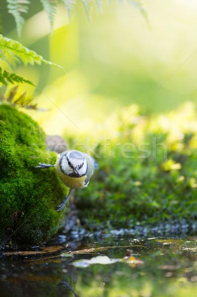 Untitled Stock photo © ivonnewierink