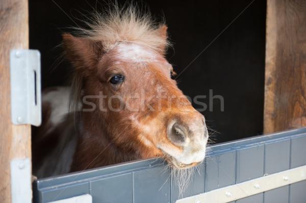 Little pony in stable Stock photo © ivonnewierink