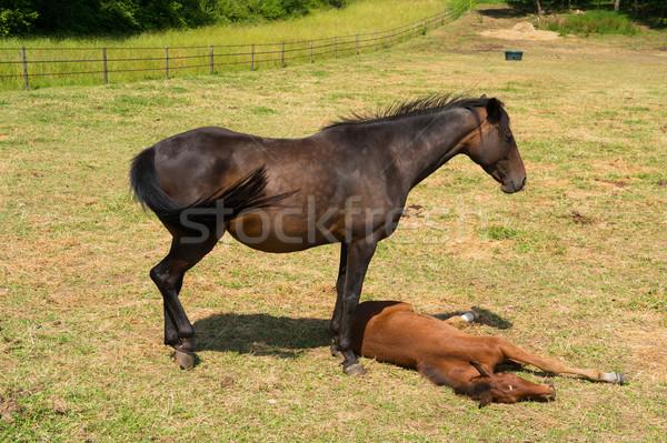 Kahverengi at tay aile çim Stok fotoğraf © ivonnewierink