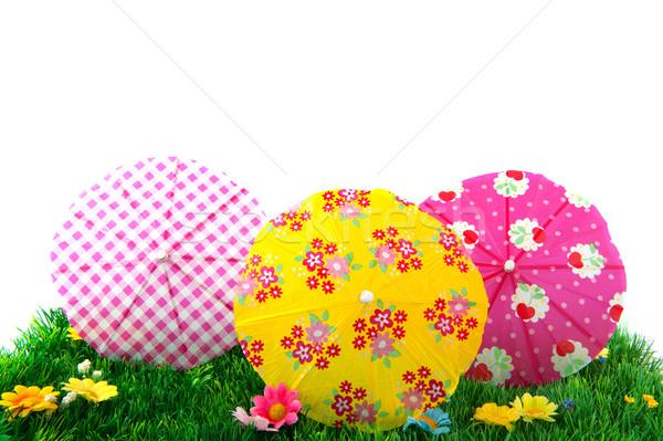 夏 草 明るい 色 孤立した ストックフォト © ivonnewierink