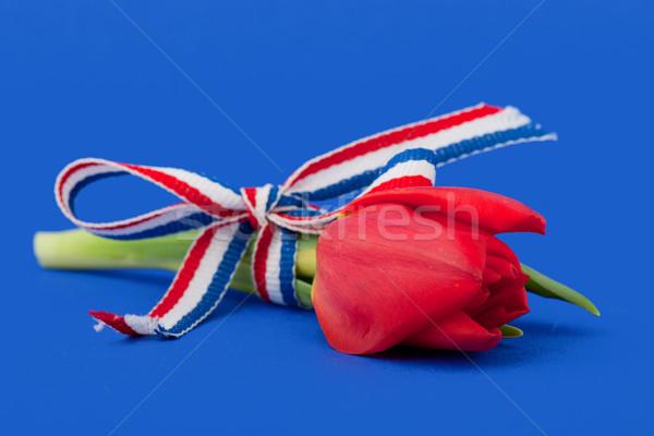 Holland Stock photo © ivonnewierink