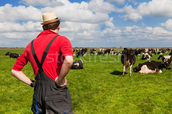 Farmer with cattle cows Stock photo © ivonnewierink
