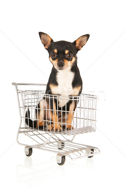 Chihuahua in shopping cart isolated over white background Stock photo © ivonnewierink