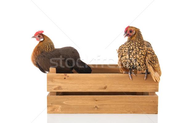 Chickens on wooden crate Stock photo © ivonnewierink