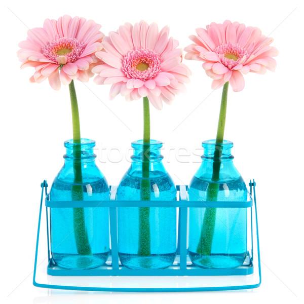 Pink Gerber in blue vases Stock photo © ivonnewierink