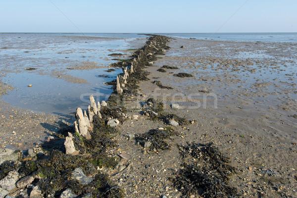 голландский морем мелкий природы пейзаж острове Сток-фото © ivonnewierink